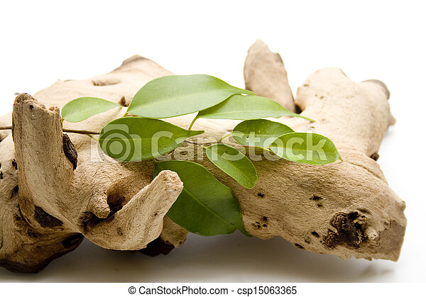 Plant branch with leaves - csp15063365