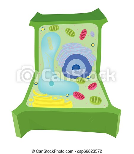 Plant Cell Diagram on