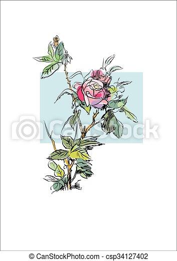 Plant flower rose - csp34127402