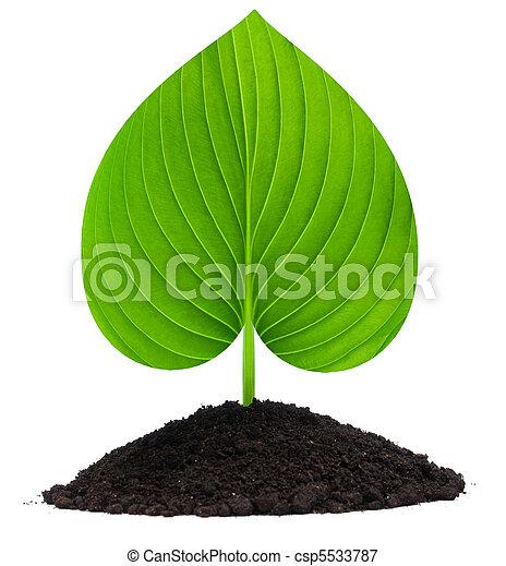 plant-heart - csp5533787