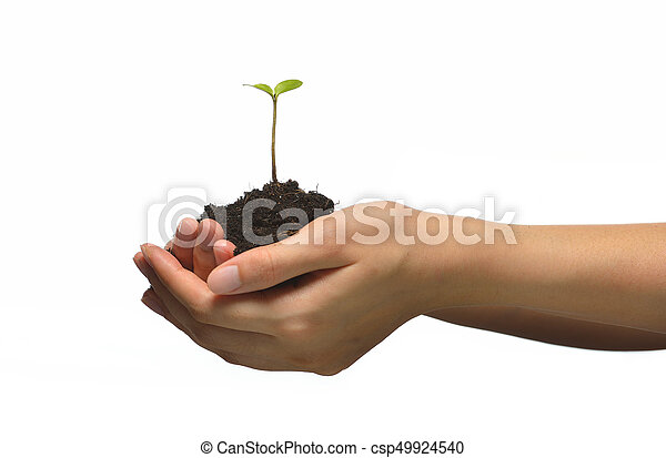 Plant in female hands isolated on white background - csp49924540