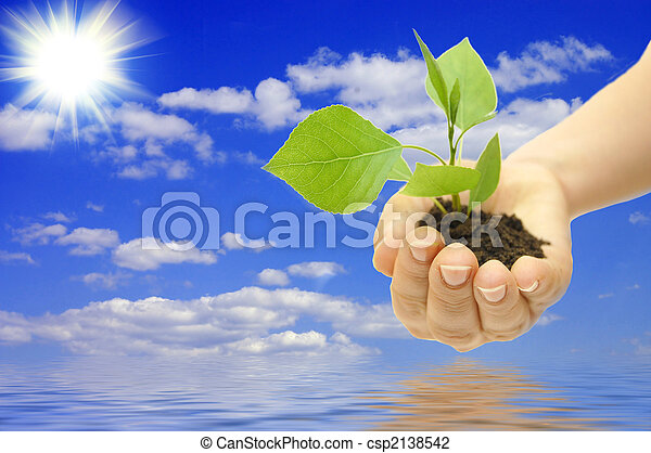 plant in hand on blue sky background with white clouds - csp2138542