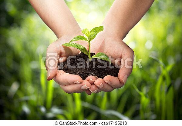 plant in hands - grass background - csp17135218