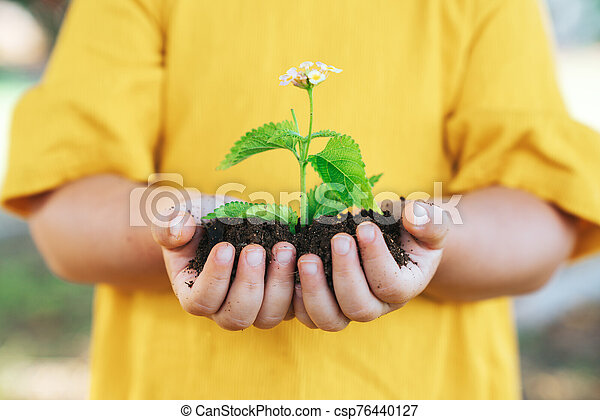 Plant in hands of little child. Growth and agriculture concept. - csp76440127