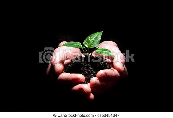 plant in hands - csp8451847