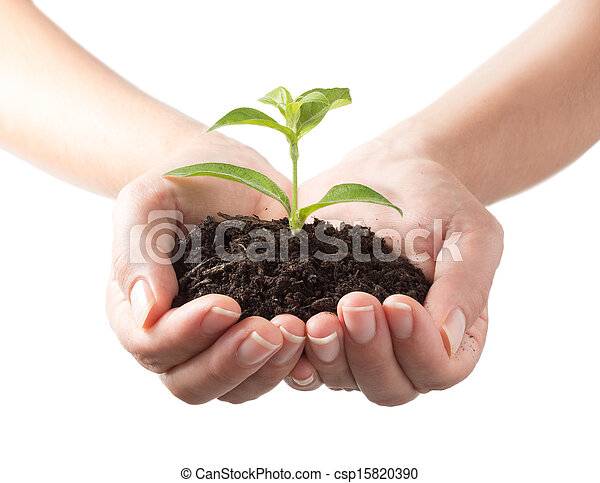 plant in hands - white background - csp15820390