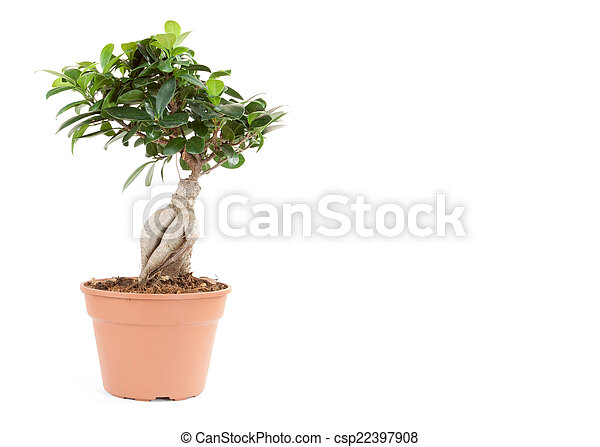 plant in pot isolated on the white backgrounds - csp22397908
