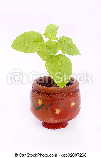 plant in pot Isolated over white - csp32007268