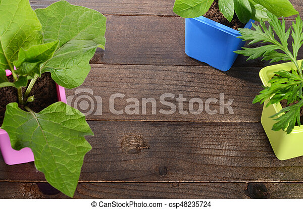 Plant in pot on wooden background - csp48235724