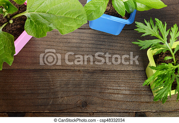 Plant in pot on wooden background - csp48332034