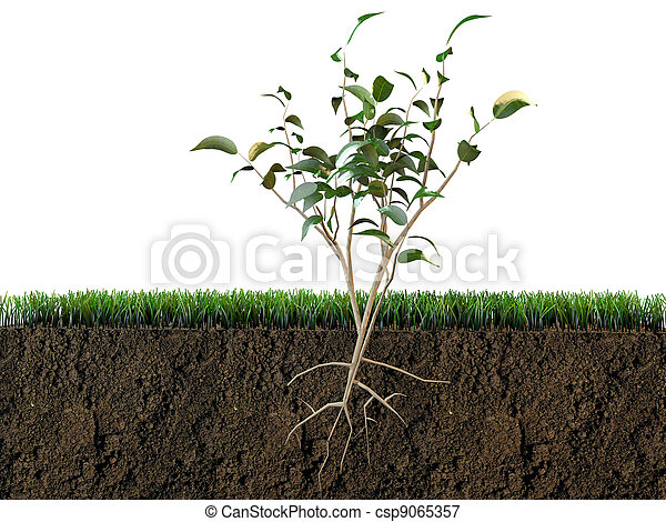 plant in soil section - csp9065357