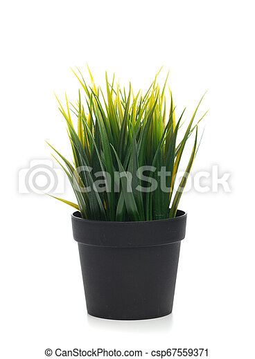 plant in the pot isolated on white. - csp67559371