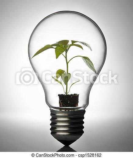 Plant inside bulb - csp1528162