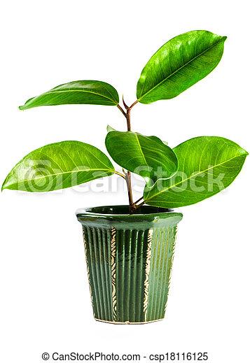 Plant isolated on white background - csp18116125