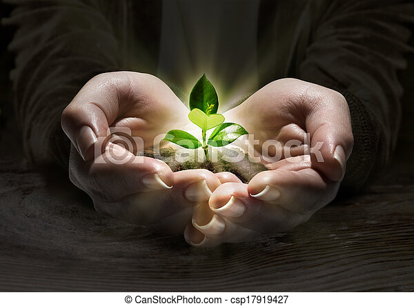 plant light in the hands, concept - csp17919427