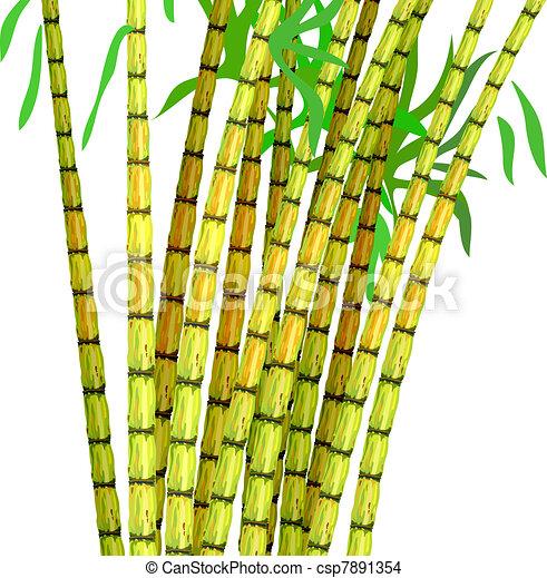 Plant of sugar cane. - csp7891354