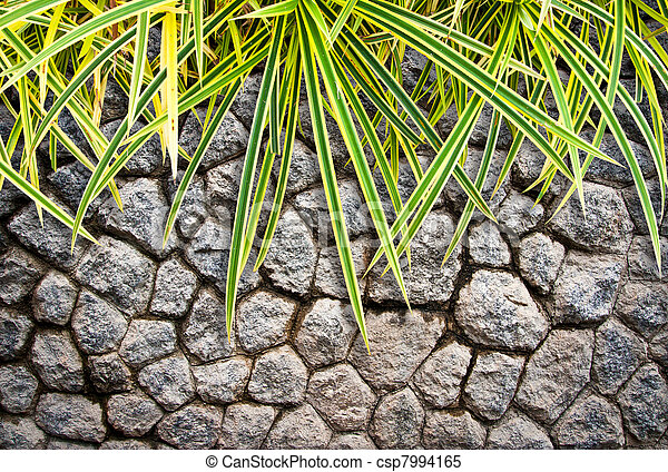 plant on stone wall background - csp7994165