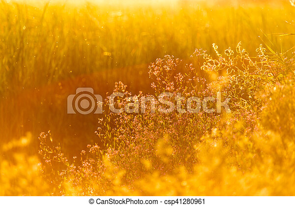 plant on the background of sunset - csp41280961