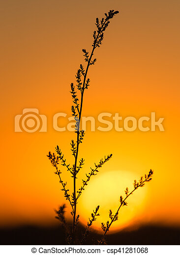 plant on the background of sunset - csp41281068