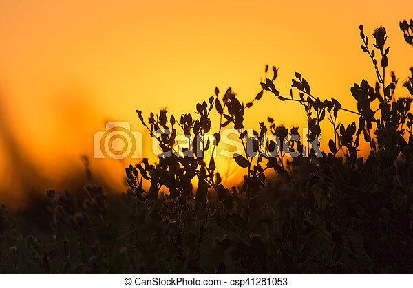 plant on the background of sunset - csp41281053
