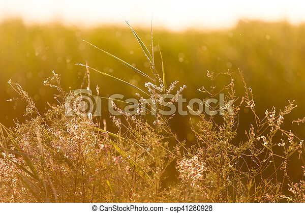 plant on the background of sunset - csp41280928