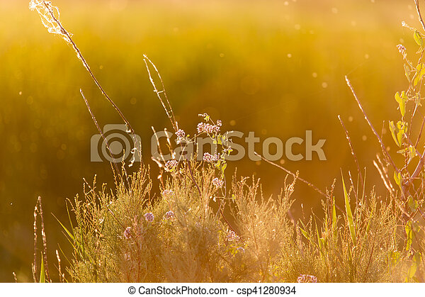 plant on the background of sunset - csp41280934
