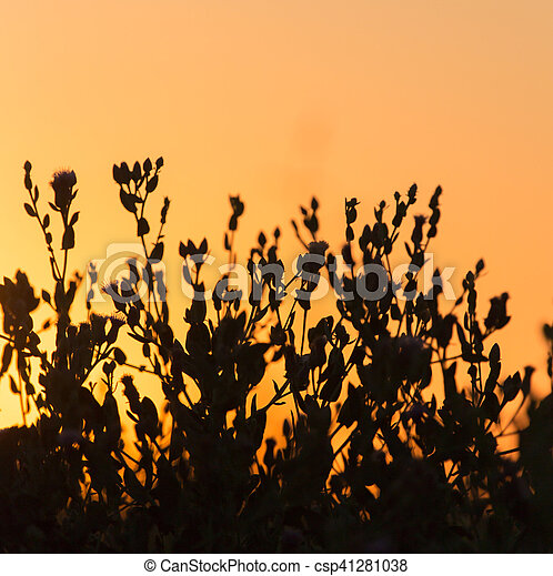 plant on the background of sunset - csp41281038