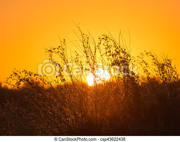 plant on the background of sunset - csp43622438