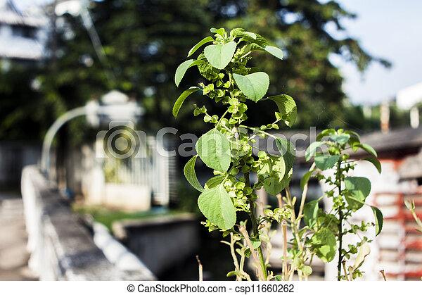 Plant on the bridge - csp11660262