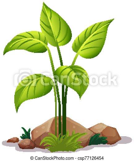 Plant on white background - csp77126454