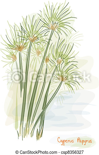 Plant Papyrus Cyperus Papyrus