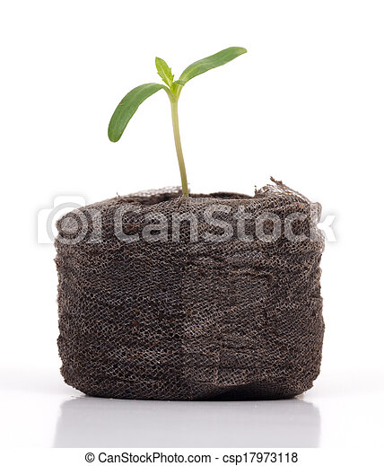 plant sprout isolated - csp17973118
