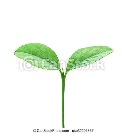 plant - csp32291357