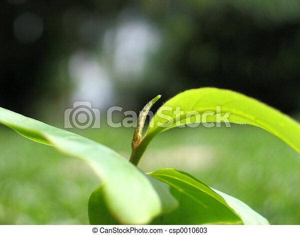 Plant - csp0010603