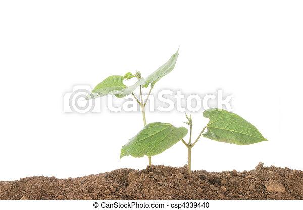 plant, twee, seedlings - csp4339440
