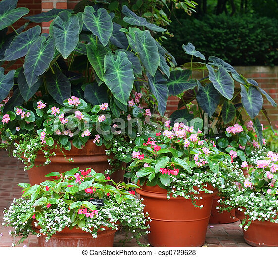 Plant variety - csp0729628