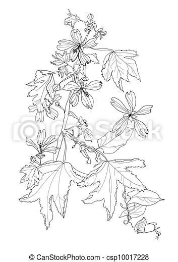 plant with flowers - csp10017228