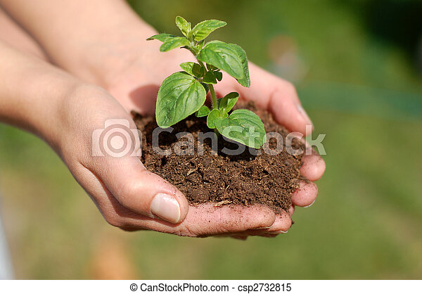 Planta - csp2732815