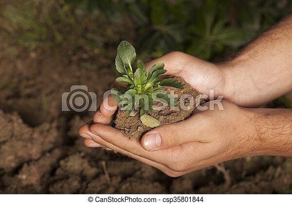 planta, capim, fundo, mãos - csp35801844