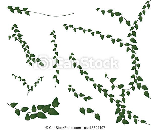 planta creeper, jogo, fundo branco - csp13594197