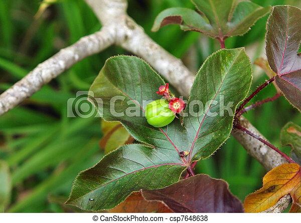 Planta en Uganda - csp7648638