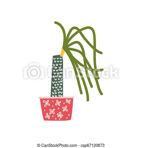 Planta de la casa Dracaena creciendo en marihuana, diseño de decoración interior natural - csp67120873