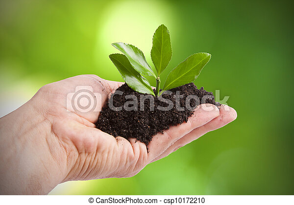 Árbol joven para plantar por hombre, ecología y Medio Ambiente - csp10172210