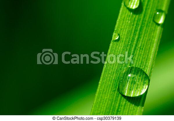 Macro imagen de gotas de agua en una hoja de planta - csp30379139