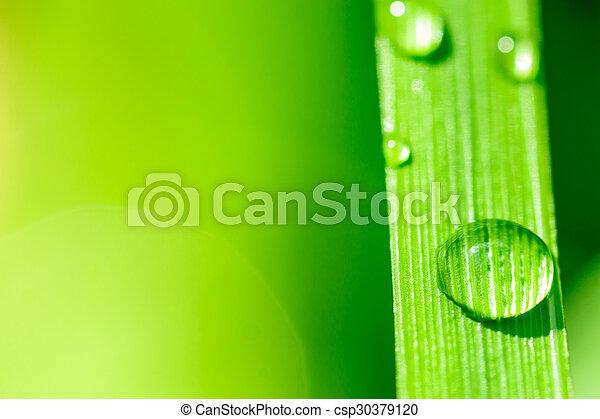 Macro imagen de gotas de agua en una hoja de planta - csp30379120