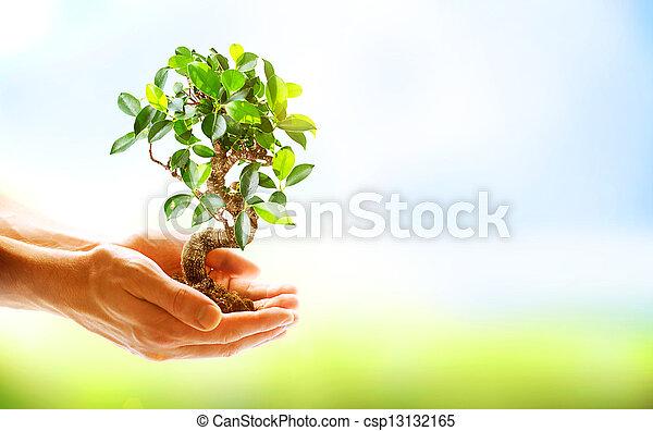 Manos humanas sosteniendo plantas verdes sobre el fondo de la naturaleza - csp13132165