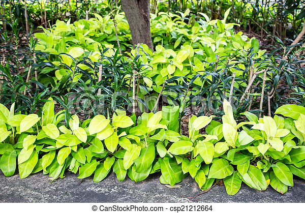 Planta jard n filodendro imagen de archivo buscar for Planta filodendro