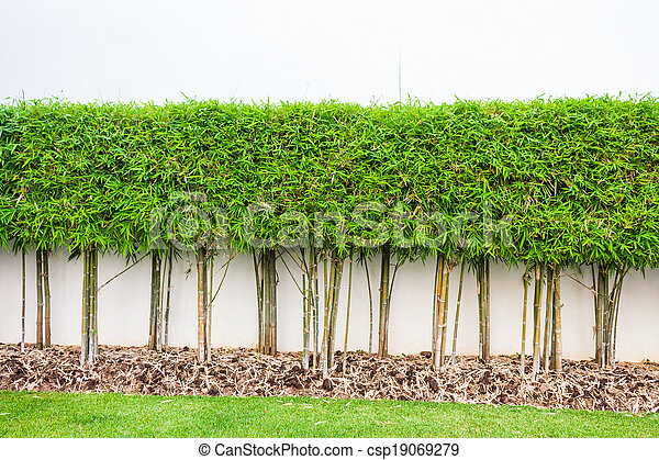 Planta jard n pared fondo verde bamb pasto o c sped for Hierba jardin