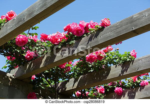 Flores de rosas en el jardín de primavera. Flores de rosas ...
