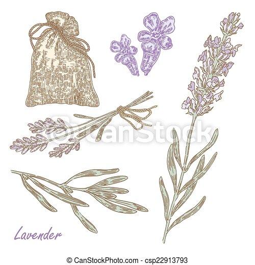 Grficos vectoriales EPS de planta lavender ilustracin mano